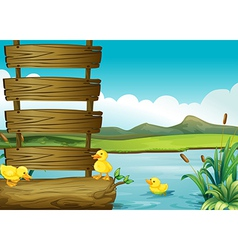 Ducklings beside an empty signboard in the river vector image vector image
