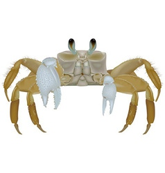 Beach Crab vector