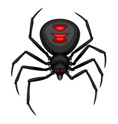 Black widow spider icon vector