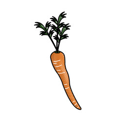 Carrot nutrition food raw vegetable image vector