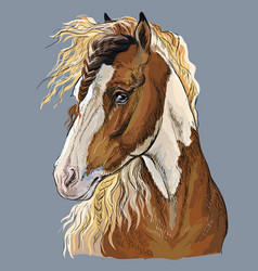 colorful hand drawing horse portrait-3 vector image