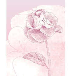 Hand drawn gentle rose on pink background vector