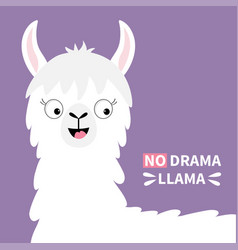 no drama llama alpaca happy head face cute vector image