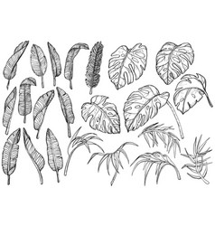 tropical jungle leaves set vector image