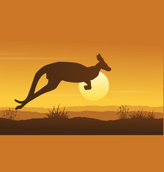landscape of kangaroo on hill silhouettes vector image