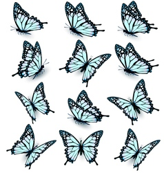 Collection of blue butterflies flying in different vector