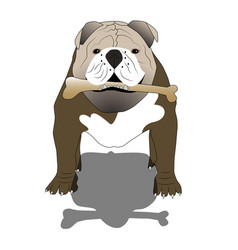 english bulldog with a bone and shadow- isolated vector image