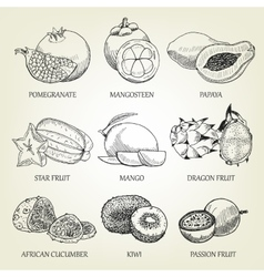 hand drawn set different tropical fruits vector image