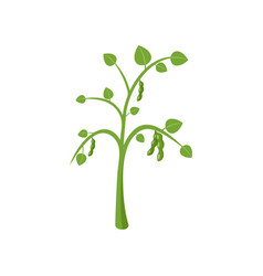 peas plant icon flat style vector image