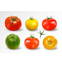 realistic of 6 different colors of tomatoes vector image