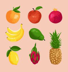 set fruits apple avocado pear dragon fruit vector image