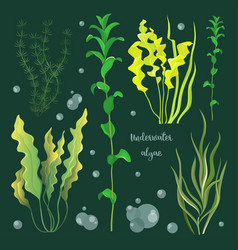 set of underwater green sea seaweeds vector image