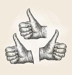 hand gesture thumbs up vintage sketch vector image vector image