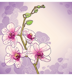 Branch of orchids vector image