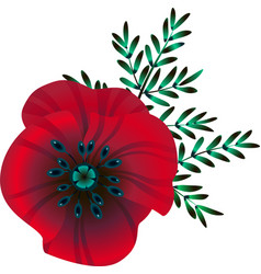 bright red poppy flower vector image
