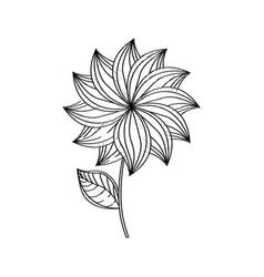 dahlia flower decoration sketch vector image