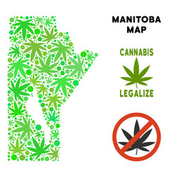 Royalty free marijuana leaves mosaic manitoba vector