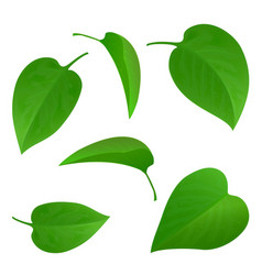 set green leaves vector image