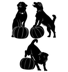 Dog and ball vector image vector image