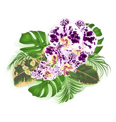 bouquet with tropical flowers orchid spotted vector image