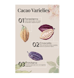 Chocolate ingredients watercolor with cocoa vector