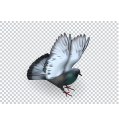 dove image isolated on white background vector image