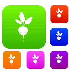 Fresh radish set collection vector