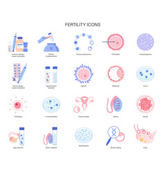 reproductive system concept vector image