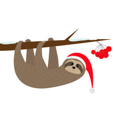 Sloth hanging on rowan rowanberry sorb berry tree vector