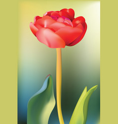 red tulip flower spring season background vector image vector image