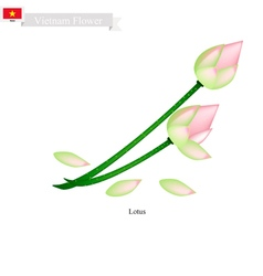 Lotus or Water Lily National Flower of Vietnam vector image