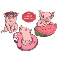Collection of hand drawn colored pigs for vector