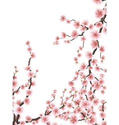 Delicate pink sakura cherry blossoms EPS 10 vector