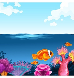 Fish swimming in the sea vector image