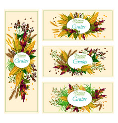 Organic cereals collection edible grains banners vector