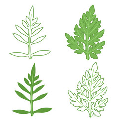 ragweed leaves set colored and outline vector image