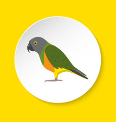 Senegal parrot icon in flat style vector