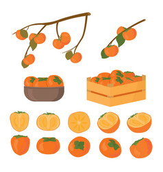 Set persimmon fruit half cutted and whole vector