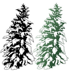 Snowy Conifer vector image
