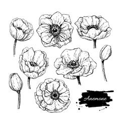 Vintage anemone set hand drawn vector