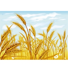 Wheat in field vector