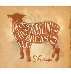 sheep lamb cutting scheme craft vector image