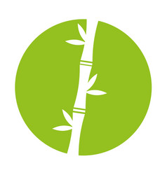 bamboo stem natural icon vector image