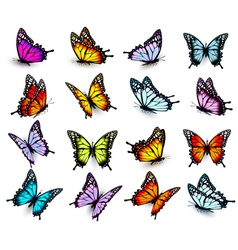 Collection colorful butterflies flying in vector