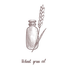 Drawing wheat germ oil vector