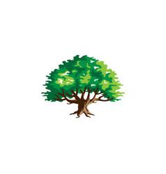 Green creative argania tree logo vector