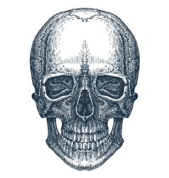 Skull logo design template fresh death vector