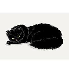 Black cat on a white background vector image