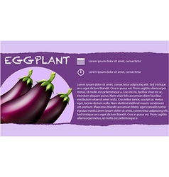 Fresh eggplants and text design vector image vector image
