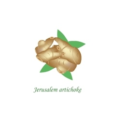 Jerusalem artichoke on vector image